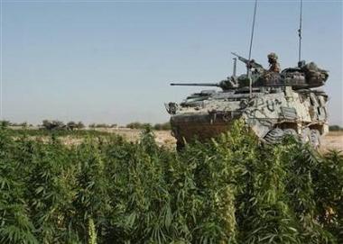 2006_10_13t112049_450x321_us_marijuana